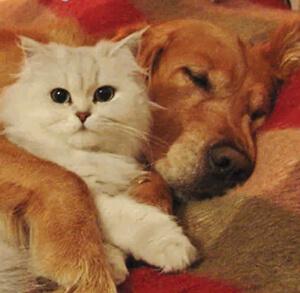 Facebook 'Stars' Cast in Pfizer Turkey Pet Photo Contest